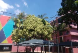 Palm Grove: Unit 212